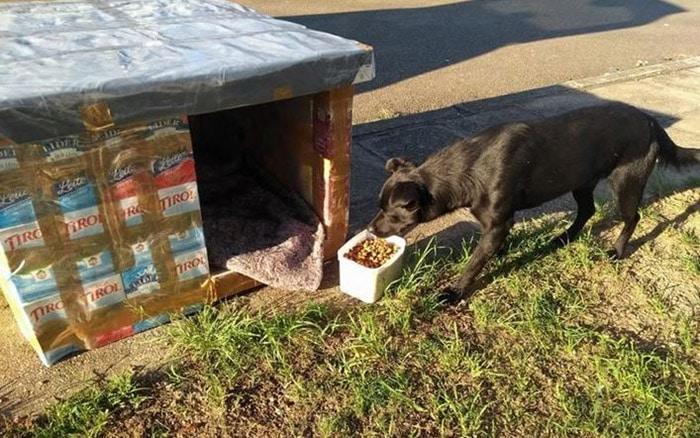 Žena pravi kućice za ulične pse koristeći kartone od mlijeka i sokova (VIDEO)